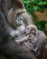 february_wildlife_pipco.jpg