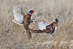 february_wildlife_rwk48.jpg