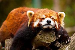 july_wildlife_htan.JPG