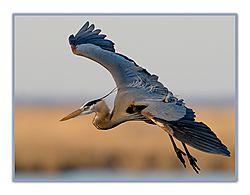 may_wildlife_TAHAWUS_53.jpg