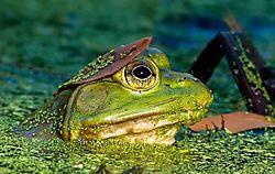may_wildlife_pipco.jpg