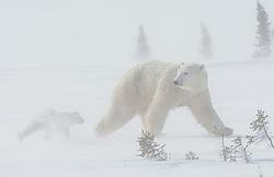 november_wildlife_ricardo00.jpg