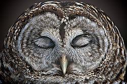 november_wildlife_rkb.jpg