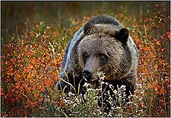 november_wildlife_scottashley.jpg