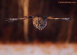 wildlife-bm.jpg