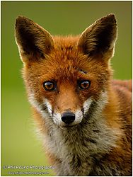 wildlife_november_Phil_Pound.jpg