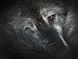 wildlife_november_scottashley.jpg