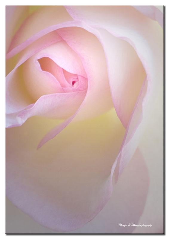 Flower Closeups /nikocarol/