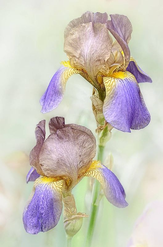 Flowers /ericbowles/