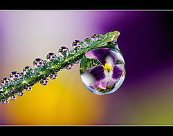 3_-_TEITZY_-_Dew_Drop_refraction.jpg