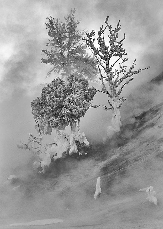 Fog /ericbowles/