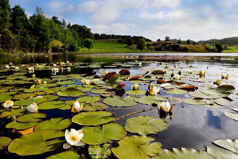 Floral Landscapes /geneluck/