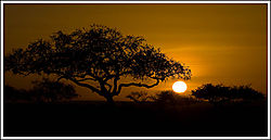 36_MNP500_Serengeti_Sunset.jpg