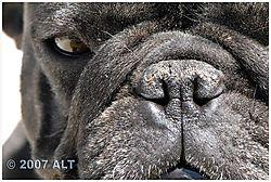 carol-closeup-6-9-07-005-ed.jpg