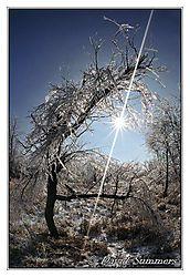 ice-tree1.jpg