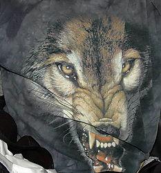 DSC_6696_Wolf_in_the_Van.jpg