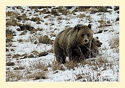 Mom-_-Cub1.jpg