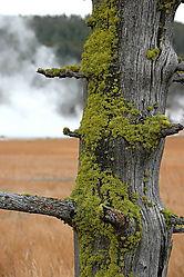 DSC_6813_Moss.jpg