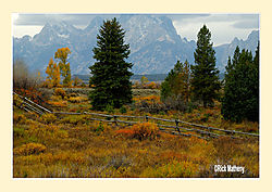 Fence-Line1.jpg