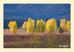Willow-Flats-Aspens.jpg