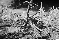 tree_branch.jpg