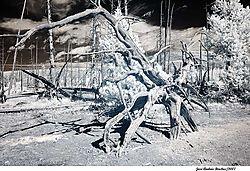 tree_branch2.jpg