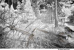 trees6.jpg