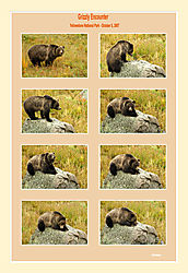 Grizzly-Encounter1.jpg