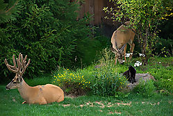 2_deer_and_kitty.jpg