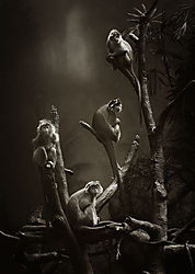 Nikonians_Wildlife_Zoo.jpg