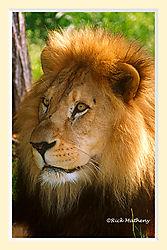 Lion8aNS2crM.jpg