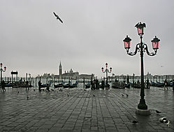 grey_at_San_Marco.jpg
