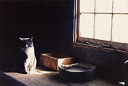 Barn_Cat_2.jpg