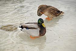 walking_on_ice.jpg
