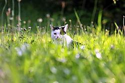 the_cat_in_the_gras_JBT2428.jpg