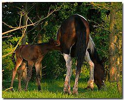 Stanmore_Horses_24-5-09_0203_sharp.jpg