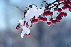 VNM3376_cherries_flare_sm.jpg