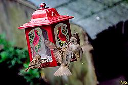 VNM5120_2finches_sm.jpg