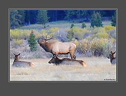 Elk_21.jpg