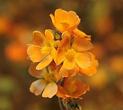 Flower23.jpg