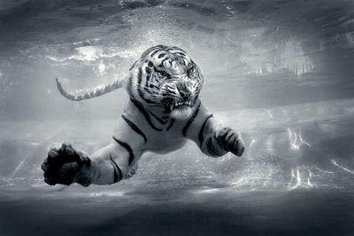 Underwater_Danger_Jeff_Rayner_jrayner