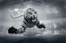 Underwater_Danger_Jeff_Rayner_jrayner.jpg