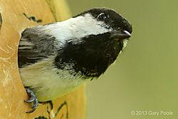 Birds_20130518_486.JPG
