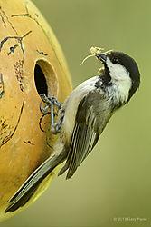 Birds_20130518_529.JPG