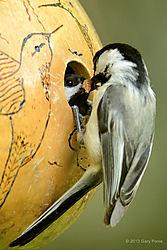 Birds_20130518_569.JPG