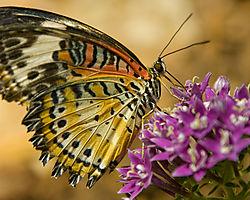 2008_03_06_butterflies_012.JPG