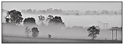 Foggy_Kib-1.jpg