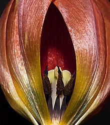 Floral_Macros-21.jpg