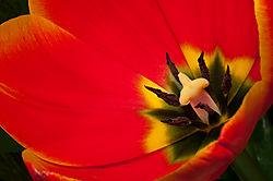 Floral_Macros-8.jpg
