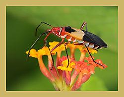 Colorful_Bug_over_a_Flower.jpg